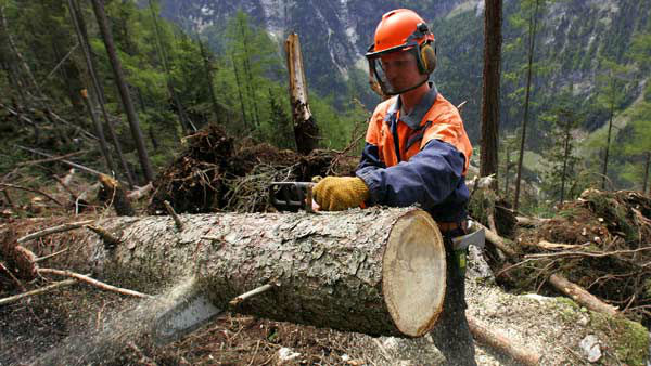 "<div class=""meta ""><span class=""caption-text "">WORST JOB - No. 199: Lumberjack (AP Photo/Diether Endlicher)</span></div>"