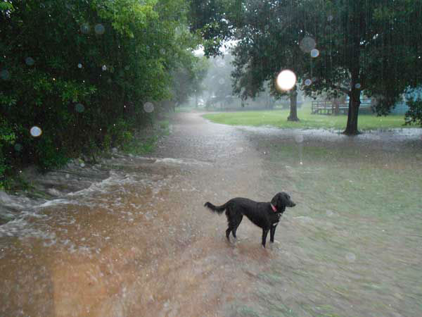 "<div class=""meta ""><span class=""caption-text "">Hail, flooding and lots of lightning were reported all over the Houston area as a weather system moved across southeast Texas Saturday. (iWitness/KTRK-TV)</span></div>"