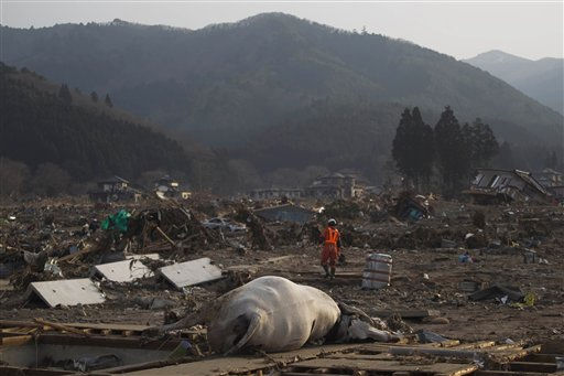 A Japanese rescue team member walks through the completely leveled village of Saito in northeastern Japan Monday, March 14, 2011. Rescue workers used chain saws and hand picks Monday to dig out bodies in Japan&#39;s devastated coastal towns, as Asia&#39;s richest nation faced a mounting humanitarian, nuclear and economic crisis in the aftermath of a massive earthquake and tsunami that likely killed thousands. &#40;AP Photo&#47;David Guttenfelder&#41; <span class=meta>(AP Photo&#47; David Guttenfelder)</span>