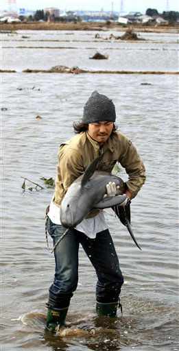 In this photo taken Tuesday, March 22, 2011, pet shop Dogwood owner Ryo Taira holds a baby porpoise that was stranded in a paddy field after being washed away by the March 11 tsunami in Sendai, Miyagi prefecture, Japan. The baby porpoise now is back in the sea. &#40;AP Photo&#47;Asahi Shimbun, Yusaku Kanagawa&#41; JAPAN OUT, NO SALES, MANDATORY CREDIT <span class=meta>(AP Photo&#47; Yusaku Kanagawa)</span>