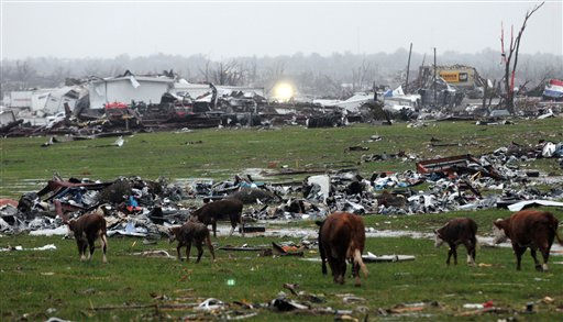 Displaced cattle walk through debris in eastern Joplin, Mo. Tuesday, May 24, 2011. A large tornado moved through much of the city Sunday, damaging a hospital and hundreds of homes and businesses. &#40;AP Photo&#47;Mike Gullett&#41; <span class=meta>(AP Photo&#47; Mike Gullett)</span>