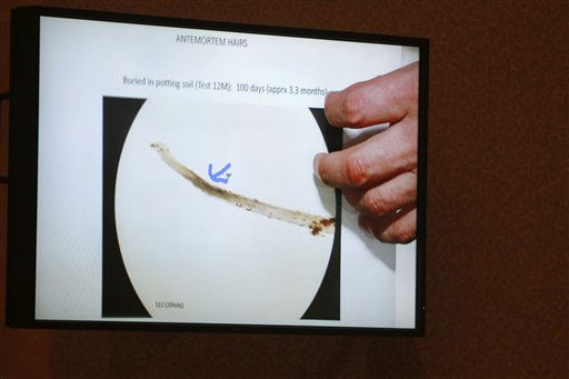 "<div class=""meta ""><span class=""caption-text "">An image projected on a courtroom monitor shows a photograph entered into evidence by a hair expert during the Casey Anthony trial at the Orange County Courthouse in Orlando, Fla., Thursday, June 23, 2011. Casey Anthony, 25, is charged with killing her daughter Caylee in the summer of 2008. (AP Photo/Joe Burbank, Pool) (AP Photo/ Joe Burbank)</span></div>"