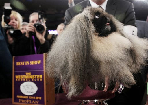 Malachy, a Pekingese, sits in the trophy after being named best in show at the 136th annual Westminster Kennel Club dog show in New York, Tuesday, Feb. 14, 2012.   <span class=meta>(AP Photo&#47; Seth Wenig)</span>