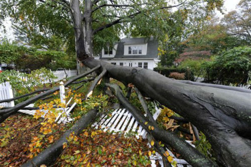 A huge tree split apart and fell over the front yard and fence of a home on Carpenter Avenue in the aftermath of Hurricane Sandy on Tuesday, Oct., 30, 2012, in Sea Cliff, N.Y. &#40;AP Photo&#47;Kathy Kmonicek&#41; <span class=meta>(AP Photo&#47; Kathy Kmonicek)</span>