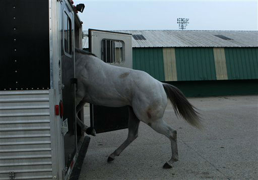 A horse is loaded into a trailer by workers at the Fair Grounds Race Course &amp; Slots, after a mandatory evacuation of the animals was issued by the track, in preparation for Tropical Storm Isaac, which is expected to become a hurricane as it moves into the Gulf of Mexico, in New Orleans, Sunday, Aug. 26, 2012.   <span class=meta>(AP Photo&#47; Gerald Herbert)</span>
