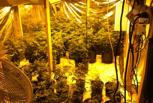 "<div class=""meta ""><span class=""caption-text "">Deputies found a marijuana growing operation inside a home off Blue Timbers Court near CE King Parkway</span></div>"