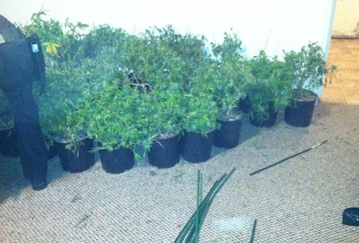 Deputies found a marijuana growing operation inside a home off Blue Timbers Court near CE King Parkway