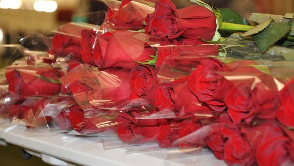 The 2011 cheerleaders were announced one by one and each woman received a rose <span class=meta>(KTRK Photo)</span>