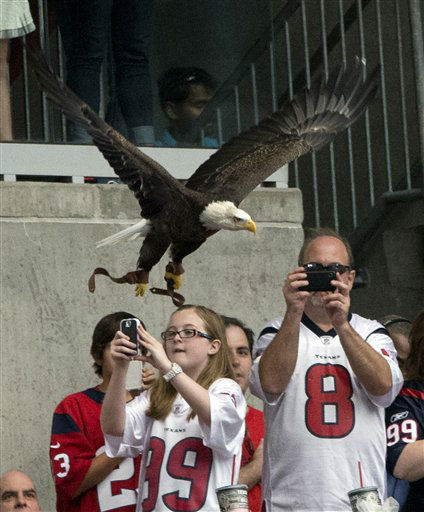 A bald eagle takes flight at Reliant Stadium during the national anthem before an NFL football game between the Buffalo Bills and the Houston Texans, Sunday, Nov. 4, 2012, in Houston. &#40;AP Photo&#47;David J. Phillip&#41; <span class=meta>(AP Photo&#47; David J. Phillip)</span>