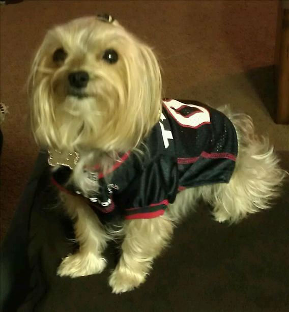 Who&#39;s ready for some football? These Texans fans are! They are just some of the photos emailed in to us through our iWitness Reports. Send your fan photos to news@abc13.com. <span class=meta>(iWitness Reports)</span>