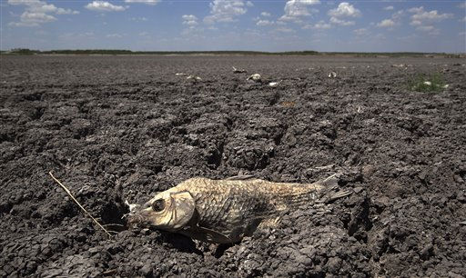 "<div class=""meta ""><span class=""caption-text "">The remains of a carp is seen on the lake dried out lake bed of O.C. Fisher Lake Wednesday, Aug. 3, 2011, in San Angelo, Texas. A bacteria called Chromatiaceae has turned the 1-to-2 acres of lake water remaining the color red. A combination of the long periods of 100 plus degree days and the lack of rain in the drought -stricken region has dried up the lake that once spanned over 5400 acres.  (AP Photo/Tony Gutierrez) (AP Photo/ Tony Gutierrez)</span></div>"