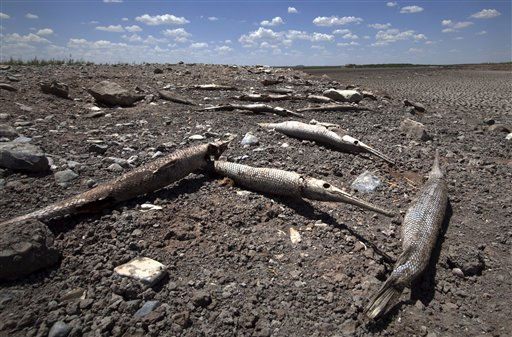 "<div class=""meta image-caption""><div class=""origin-logo origin-image ""><span></span></div><span class=""caption-text"">The remains of several alligator gars are seen along the dried out bed of O.C. Fisher Lake Wednesday, Aug. 3, 2011, in San Angelo, Texas. A bacteria called Chromatiaceae has turned the 1-to-2 acres of lake water remaining the color red. A combination of the long periods of 100 plus degree days and the lack of rain in the drought -stricken region has dried up the lake that once spanned over 5400 acres.  (AP Photo/Tony Gutierrez) (AP Photo/ Tony Gutierrez)</span></div>"