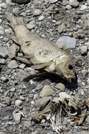 "<div class=""meta image-caption""><div class=""origin-logo origin-image ""><span></span></div><span class=""caption-text"">The remains of a dead fish is seen on the dried bed of O.C. Fisher Lake at San Angelo State Park Wednesday, Aug. 3, 2011, in San Angelo, Texas. According to state park officials, long periods of 100 degree plus days and lack of rain in the drought-stricken region over the past few years has nearly dried out the man made reservoir that once spanned over 5400 acres. (AP Photo/Tony Gutierrez) (AP Photo/ Tony Gutierrez)</span></div>"