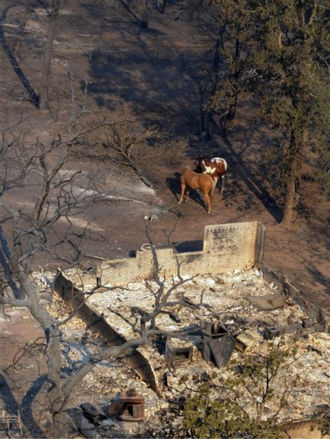 This photo provided by Texas Parks and Wildlife shows horses huddling next to the remains of a home burned in the Colovista area of Bastrop, Texas. More than 1,000 homes have been destroyed in at least 57 wildfires across rain-starved Texas, most of them in one devastating blaze near Austin that is still raging out of control, officials said Tuesday. &#40;AP Photo&#47;Texas Parks and Wildlife Foundation, Chase A. Fountain&#41; <span class=meta>(AP Photo&#47; Chase A. Fountain)</span>