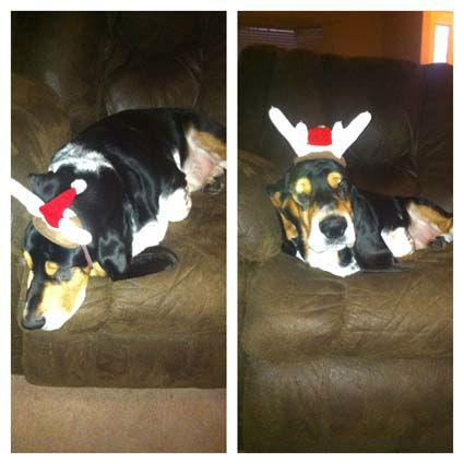 "<div class=""meta image-caption""><div class=""origin-logo origin-image ""><span></span></div><span class=""caption-text"">Did you know today was National Decorate Your Dog Day? It's a day to help get your pooch get into the holiday spirit!  These are photos our viewers have sent in.  Do you have one some to share?  Send them to news@abc13.com and we'll post 'em here. (Photo/iWitness reports)</span></div>"