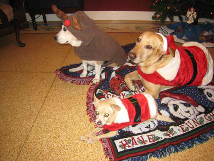 "<div class=""meta ""><span class=""caption-text "">Did you know today was National Decorate Your Dog Day? It's a day to help get your pooch get into the holiday spirit!  These are photos our viewers have sent in.  Do you have one some to share?  Send them to news@abc13.com and we'll post 'em here. (Photo/iWitness reports)</span></div>"