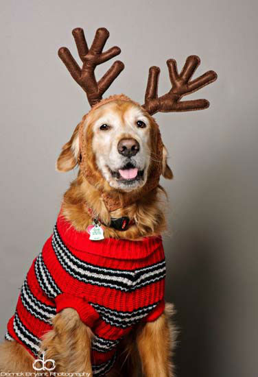 Did you know today was National Decorate Your Dog Day? It&#39;s a day to help get your pooch get into the holiday spirit!  These are photos our viewers have sent in.  Do you have one some to share?  Send them to news@abc13.com and we&#39;ll post &#39;em here. <span class=meta>(Photo&#47;iWitness reports)</span>