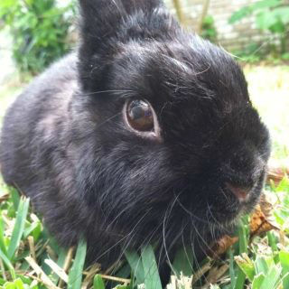 &#34;Bunny&#34; is doing well, and his owner says they bonded over his near-death experience <span class=meta>(KTRK Photo&#47; Courtesy of Sonya Arndt)</span>