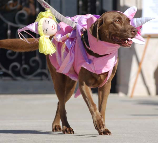 Dogs donned their best costumes Saturday for the Howl-O-Ween Dog Walk &amp; Expo at La Centerra in Katy.  ABC-13&#39;s Casey Curry and Miya Shay served as judges for the annual event! <span class=meta>(Photo&#47;ABC-13)</span>