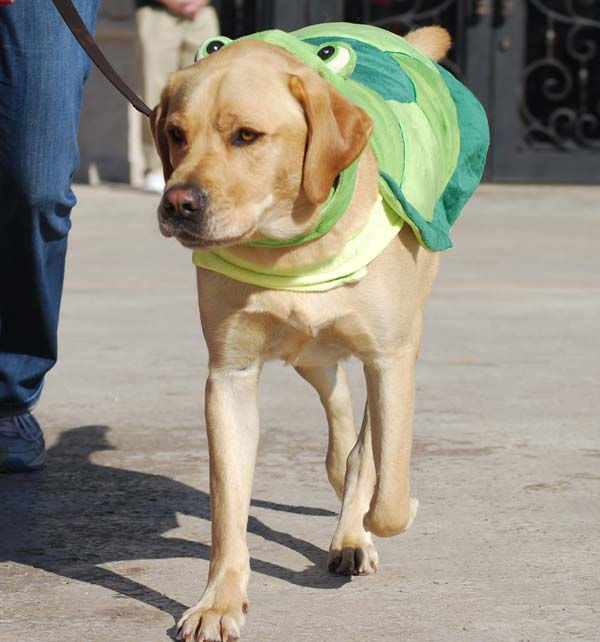 "<div class=""meta image-caption""><div class=""origin-logo origin-image ""><span></span></div><span class=""caption-text"">Dogs donned their best costumes Saturday for the Howl-O-Ween Dog Walk & Expo at La Centerra in Katy.  ABC-13's Casey Curry and Miya Shay served as judges for the annual event! (Photo/ABC-13)</span></div>"