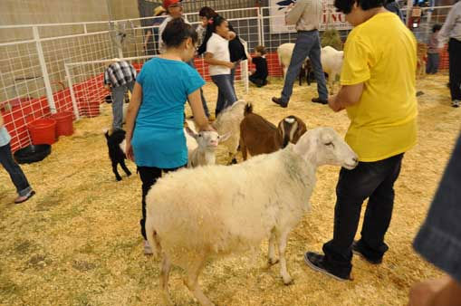 "<div class=""meta ""><span class=""caption-text "">It was all smiles at the Houston Livestock Show and Rodeo for children and even adults who got to watch chicks hatch and pet animals. (KTRK Photo/ Mena El-Sharkawi)</span></div>"