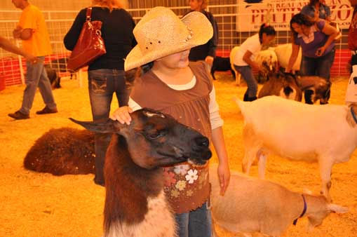 "<div class=""meta image-caption""><div class=""origin-logo origin-image ""><span></span></div><span class=""caption-text"">It was all smiles at the Houston Livestock Show and Rodeo for children and even adults who got to watch chicks hatch and pet animals. (KTRK Photo/ Mena El-Sharkawi)</span></div>"