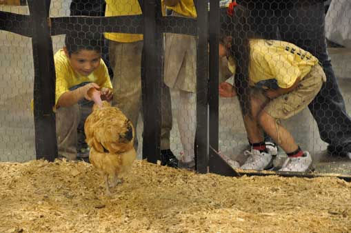 It was all smiles at the Houston Livestock Show and Rodeo for children and even adults who got to watch chicks hatch and pet animals. <span class=meta>(KTRK Photo&#47; Mena El-Sharkawi)</span>