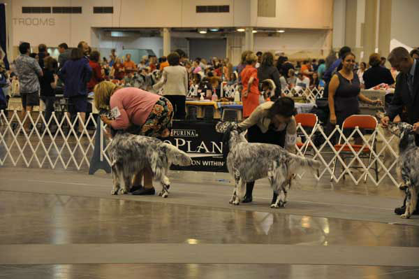 "<div class=""meta image-caption""><div class=""origin-logo origin-image ""><span></span></div><span class=""caption-text"">Houston's 36th annual Reliant Park World Series of Dog Shows July 17-21, 2013, was a canine extravaganza featuring breed judging, obedience and agility competitions, performances, races, shopping, adoptions and more (KTRK Photo/ Kristy Gillentine)</span></div>"