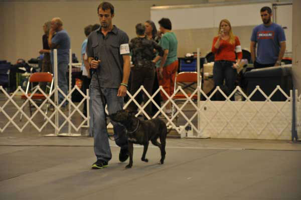 Houston&#39;s 36th annual Reliant Park World Series of Dog Shows July 17-21, 2013, was a canine extravaganza featuring breed judging, obedience and agility competitions, performances, races, shopping, adoptions and more.  <span class=meta>(KTRK Photo&#47; Kristy Gillentine)</span>