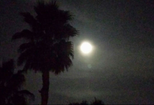 These are some of the photos you sent in of our Blue Moon over Houston last night.  If you shot photos of it, send them to us at news@abc13.com <span class=meta>(Photo&#47;iWitness Reports)</span>