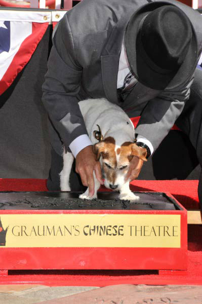 "<div class=""meta ""><span class=""caption-text "">Uggie, the 10-year-old Jack Russell terrier who starred in 'The Artist,' was honored with a retirement party and a paw print ceremony at Grauman's Chinese Theatre on June 25, 2012. Uggie is seen with his trainer Omar Von Muller at the event.  'The Artist' will be released on Blu-ray and DVD on June 26.  (Photo/Robert Freeman)</span></div>"