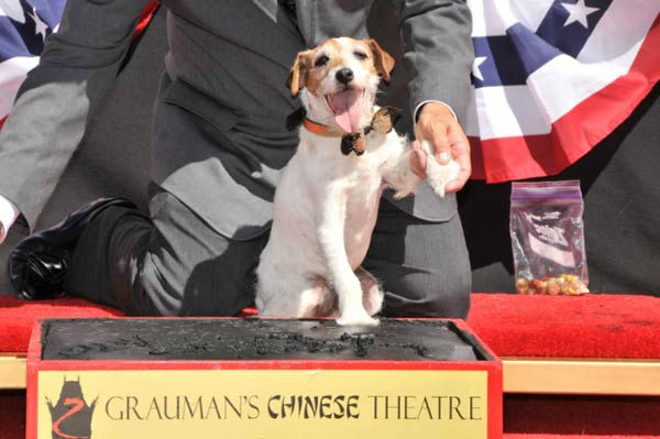 Uggie, the 10-year-old Jack Russell terrier who starred in &#39;The Artist,&#39; was honored with a retirement party and a paw print ceremony at Grauman&#39;s Chinese Theatre on June 25, 2012.  &#39;The Artist&#39; will be released on Blu-ray and DVD on June 26.  <span class=meta>(Photo&#47;Robert Freeman)</span>