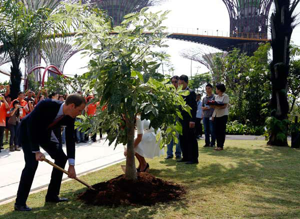 "<div class=""meta ""><span class=""caption-text "">Britain's Prince William, left, and his wife Kate, the Duke and Duchess of Cambridge plant a tree during their tour at Gardens by the Bay in Singapore, Wednesday, Sept. 12, 2012. Middleton wore a white eyelet skirt suit designed by Alexander McQueen with navy blue Stuart Weizman Corkswoon wedges. (AP Photo/ Stephen Morrison)</span></div>"