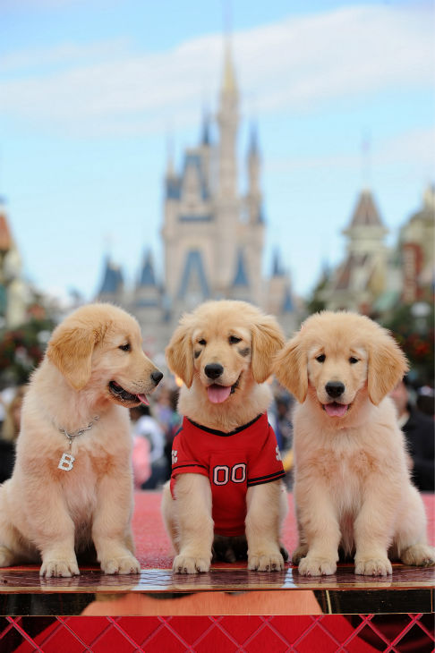 Puppies appear at the 2011 Disney Parks...