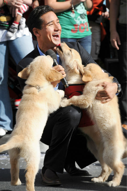 Mario Lopez and puppies appear at the 2011 Disney Parks Christmas Day Parade at Walt Disney World&#39;s Magic Kingdom in Florida. The special airs Christmas Day, at various times across the country, on ABC.  <span class=meta>(Disneyland &#47; Mark Ashman)</span>