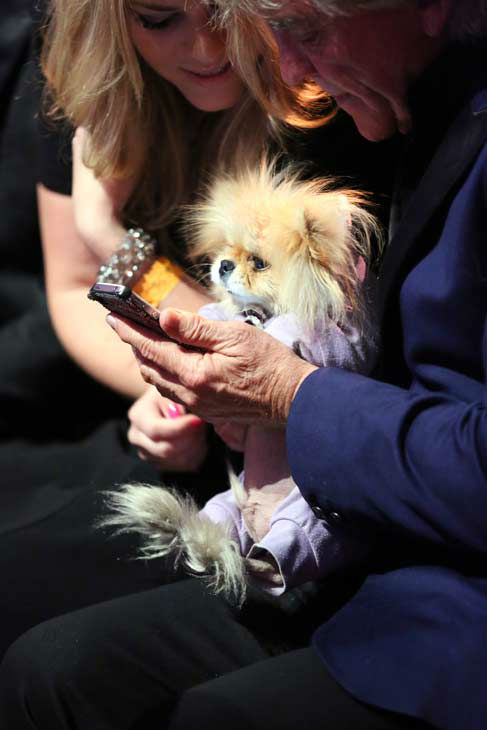 Contestant Lisa Vanderpump&#39;s dog, Giggy, appears on &#39;Dancing With The Stars&#39; on April 1, 2013. <span class=meta>(ABC Photo&#47; Adam Taylor)</span>