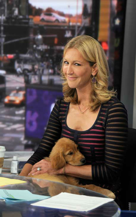 Lara Spencer appeared with a golden retriever puppy to on June 17, 2013, promote the show&#39;s &#39;Dog vs. Dog&#39; week. <span class=meta>(ABC Photo&#47; Donna Svennevik)</span>
