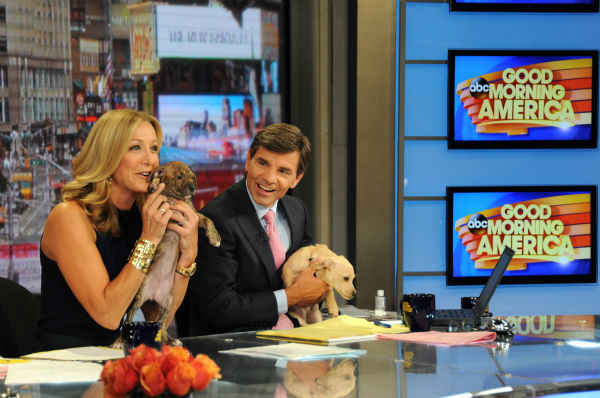 Lara Spencer and George Stephanopoulos appear with puppies  -- who are up for adoption -- on ABC&#39;s &#39;Good Morning America&#39; &#40;&#39;GMA&#39;&#41; on Aug. 12, 2013. Carrie Underwood was a guest co-host that day. <span class=meta>(ABC Photo &#47; Donna Svennevik)</span>