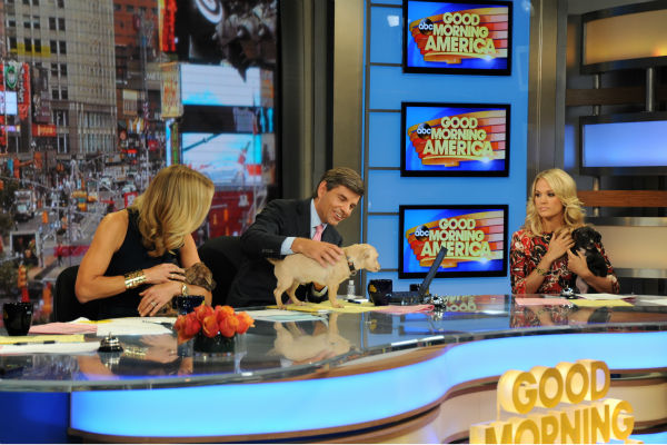 "<div class=""meta ""><span class=""caption-text "">Guest co-host Carrie Underwood and presenters Lara Spencer and George Stephanopoulos appear on ABC's 'Good Morning America' ('GMA') with puppies -- who are up for adoption -- on Monday, Aug. 12, 2013. (ABC Photo / Donna Svennevik)</span></div>"