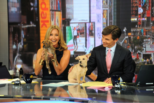 "<div class=""meta image-caption""><div class=""origin-logo origin-image ""><span></span></div><span class=""caption-text"">Lara Spencer and George Stephanopoulos appear with puppies  -- who are up for adoption -- on ABC's 'Good Morning America' ('GMA') on Aug. 12, 2013. Carrie Underwood was a guest co-host that day. (ABC Photo / Donna Svennevik)</span></div>"