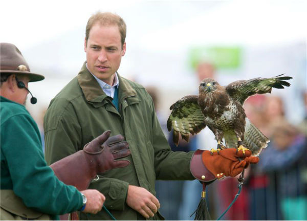 Prince William, Duke of Cambridge, holds a Harris Hawk during a fal