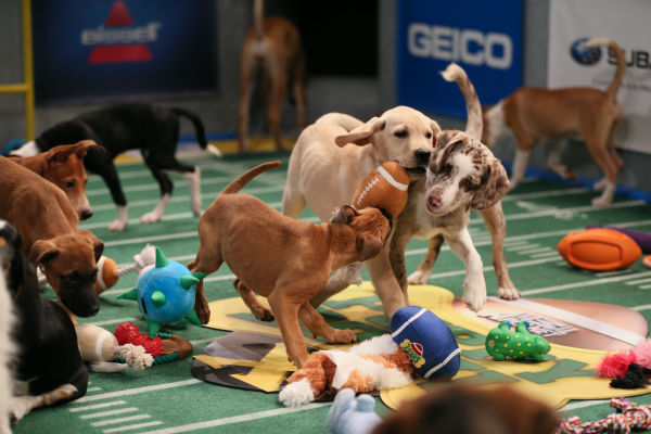 "<div class=""meta ""><span class=""caption-text "">Dogs and puppies play during Puppy Bowl X, which airs on Animal Planet on Feb. 2 at 3 p.m. ET. The NFL Super Bowl XLVIII starts officially at 3:30 p.m. ET. (Animal Planet / Damian Strohmeyer)</span></div>"