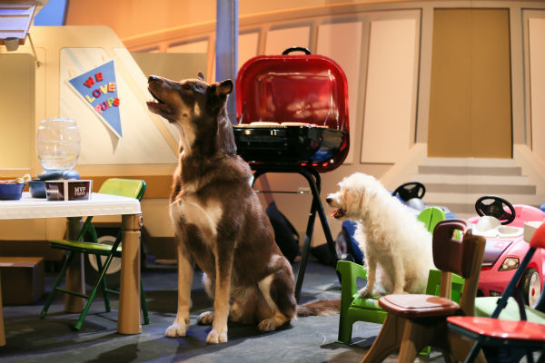 Dogs enjoy a tailgate party during Puppy Bowl X, which airs on Animal Planet on Feb. 2 at 3 p.m. ET. The NFL Super Bowl XLVIII starts officially at 3:30 p.m. ET. <span class=meta>(Animal Planet &#47; Damian Strohmeyer)</span>