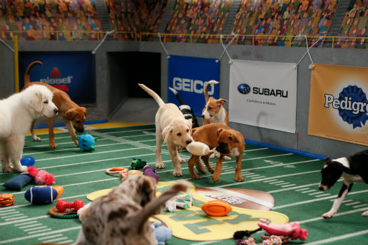 Dogs and puppies play during Puppy Bowl X, which airs on Animal Planet on Feb. 2 at 3 p.m. ET. The NFL Super Bowl XLVIII starts officially at 3:30 p.m. ET. <span class=meta>(Animal Planet &#47; Damian Strohmeyer)</span>