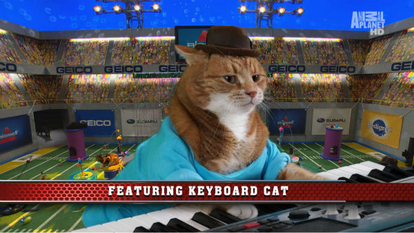 "<div class=""meta ""><span class=""caption-text "">Keyboard Cat appears at the Kitty Halftime Show at Puppy Bowl X, which airs on Animal Planet on Feb. 2 at 3 p.m. ET. The NFL Super Bowl XLVIII starts officially at 3:30 p.m. ET. (Animal Planet / Damian Strohmeyer)</span></div>"