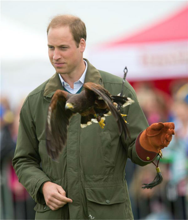 "<div class=""meta ""><span class=""caption-text "">Prince William, Duke of Cambridge, holds a Harris Hawk during a falconry demonstration with birds of prey at the Anglesey agricultural show at Anglesey Showground in Bangor, Wales on Aug. 14, 2013. The event marked his first official engagement since the birth of his and wife Kate's son Prince George of Cambridge last month. Prince William was given two weeks of parental leave from his work as a RAF rescue helicopter pilot in Anglesey. (Barcroft Media / startraksphoto.com)</span></div>"