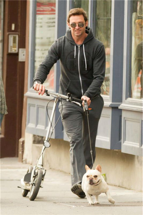 Hugh Jackman rides a scooter and walks his family's dog, Dali, in New York City on Oct. 23, 2013.