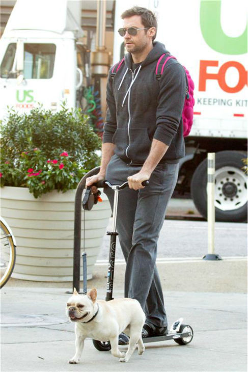 Hugh Jackman rides a scooter in New York City on Oct. 23, 2013. &#47; Hugh Jackman rides a scooter and walks his family&#39;s dog, Dali, in New York City on Oct. 23, 2013. <span class=meta>(Freddie Baez &#47; Startraksphoto.com)</span>
