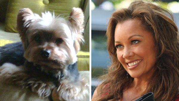 Vanessa Williams Yorkie dog, Enzo, appears in an undated photo. / Vanessa Williams appears in a scene from the 2010 episode of Desperate Housewives. - Provided courtesy of vanessawilliams.com / ABC