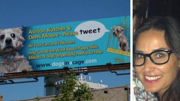 Dogs Need Cages billboard in Los Angeles. / Demi Moore appears an undated picture from her Twitter page. - Provided courtesy of Main Line Animal Rescue / Demi Moores official Twitter page / twitter.com/mrskutcher